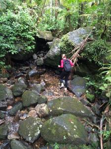 Hiking in El Yunque
