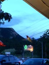 The hummingbirds at the Maxwell Inn